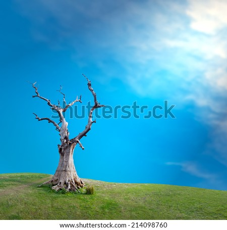 Sun light through clouds and big old dead tree mystical creative concept background  - stock photo