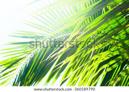 Sun light through palm leaves. For Holiday travel design. Tropical summer background  - stock photo