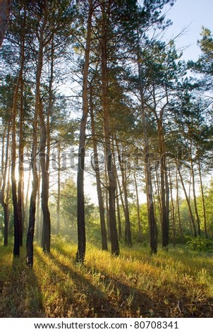 Sun lighted woods in the morning - stock photo