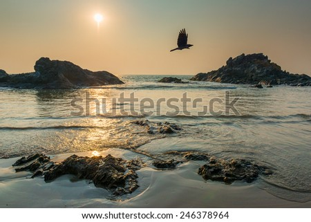 sun over the sea and the flying crow - stock photo