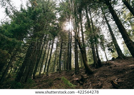 Sun raise in Mountain Forest background. Misty green pine forest landscape. Travel - stock photo