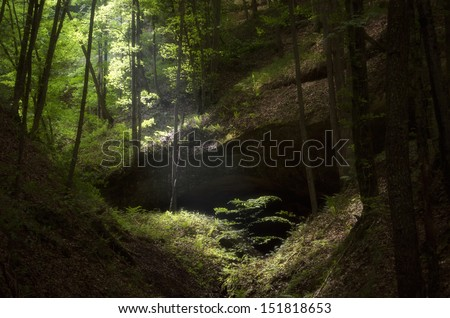 sun ray illuminating small tree in green forest
