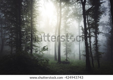 sun ray in misty forest