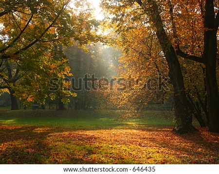 Sun rays breaking through the trees in fall time 1019_30