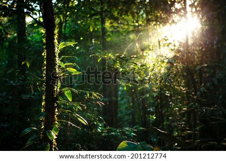 Sun rays deep in the rain forest - stock photo