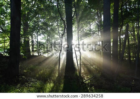 Sun rays from behind a tree.