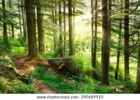 Sun rays illuminating a misty forest scenery with fresh and vibrant green foliage and a footpath - stock photo