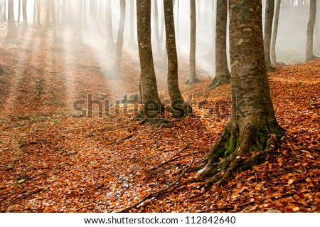 Sun rays in an autumn forest - stock photo