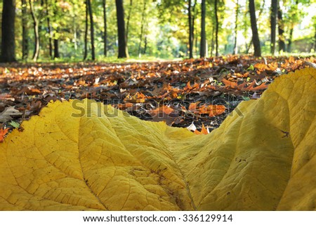 sun rays in autumn forest viewed through a yellow leaf