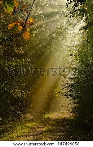 sun rays in foggy autum forrest - stock photo