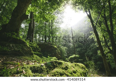 sun rays in natural green forest - stock photo