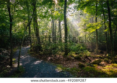 Sun rays in the forest, seen on the Limberlost Trail in Shenandoah National Park, Virginia.