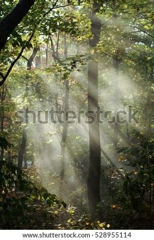 Sun Rays in the woods from smoke in the woods/ Sun Rays in woods
