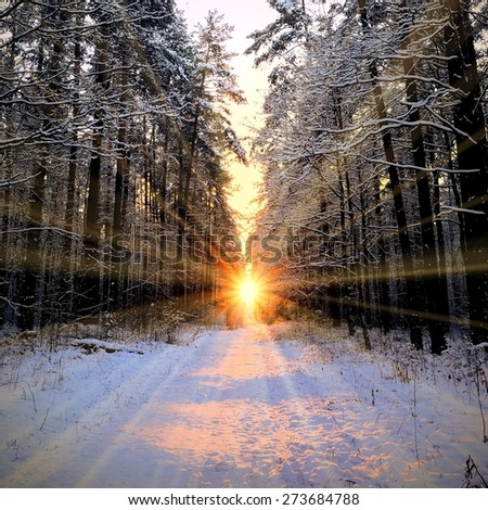 Sun rays in winter forest - stock photo