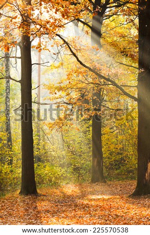 sun rays lit glade in autumn forest in sunny day
