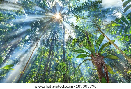 Sun rays shining threw leafs and mist in the Venezuelan jungle on the Highlands of Guiana - stock photo