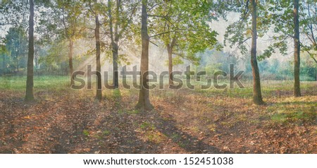 Sun rays shining through branches of trees in the oak wood, vintage panorama - stock photo