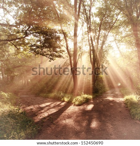 Sun rays shining through branches of trees, vintage landscape - stock photo