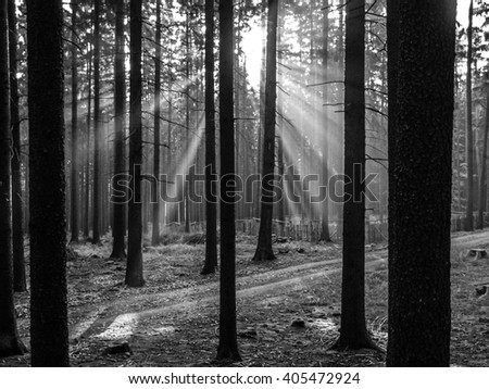 Sun rays shining through forest - stock photo