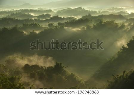 Sun rays shining through the haze and trees. - stock photo