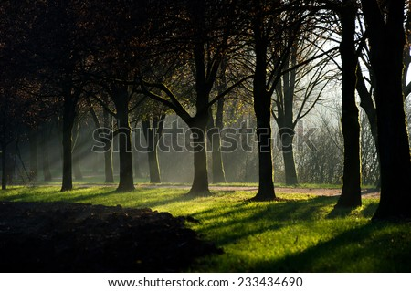 Sun rays shining through the misty fog that lingers between a beautiful avenue of trees.