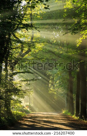 Sun rays shining through the trees at a lane in the forrest. - stock photo