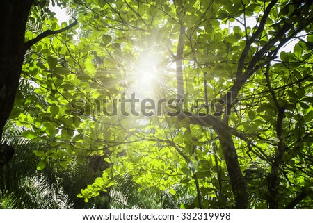 Sun rays shining through tree branches