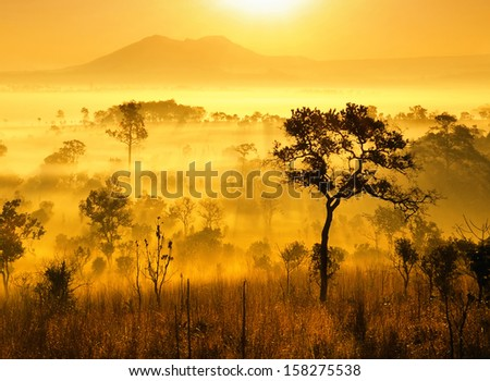 Sun rays though the foggy field in the morning - stock photo
