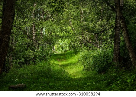 sun rays through branches and path in the beautiful magic wood - stock photo