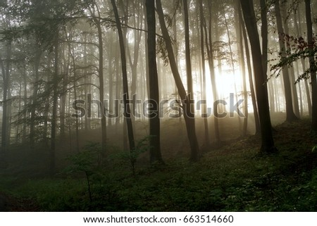 Sun rays through the fog and the forest