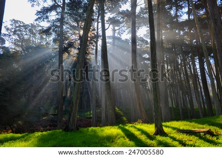 Sun rays through the forest trees with lush green ground - stock photo