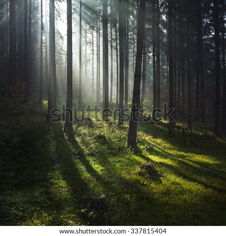 Sun rays through the trees inside the forest. The moment when the fog lifted
