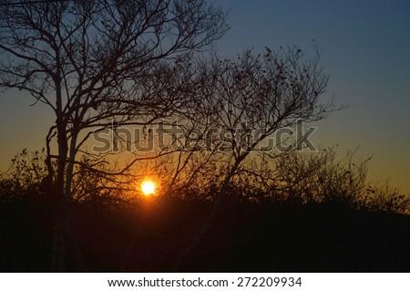 Sun Rise Through the Trees - stock photo