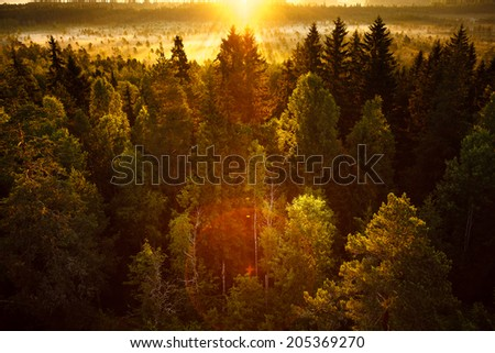 Sun rising on an early morning at the swamp in Finland. Sunlight hitting on the forest at very low angle. - stock photo