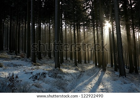 sun's rays in the winter forest with spruce forest path - stock photo