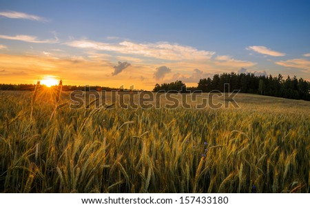 sun sets over field of wheat - stock photo