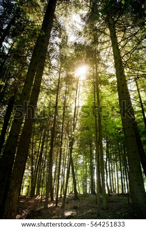 Sun shines through the trees in a forest
