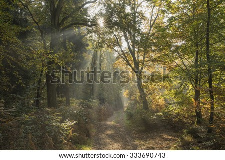 Sun shining in autumn forest
