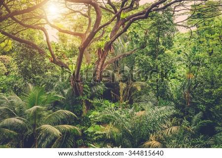 Sun shining into tropical green jungle - stock photo