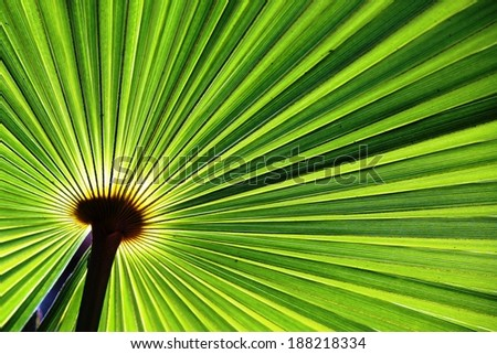 Sun shining through a radiating green leaf. Natural background texture