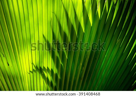 Sun shining through a radiating green leaf. Natural background texture. - stock photo