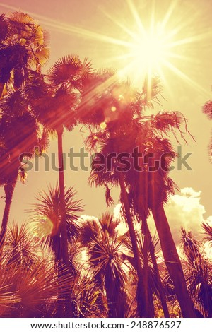 Sun shining through tall palm trees. Vertical shot. Summer, fashion, travel, vacation, tourism, lifestyle and weather concept.
