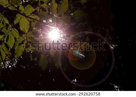 sun shining through the trees in the forest - stock photo