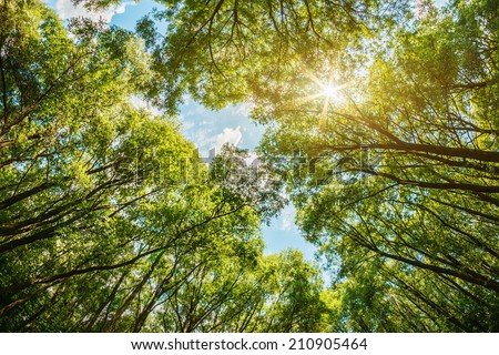sun shining through the treetops. The sun is natural, without the use of filters - stock photo