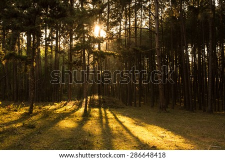 Sun Shining Through Tree in Forest - stock photo