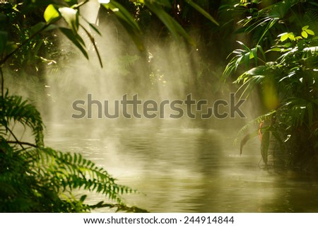 Sun shining through trees and fog in a tropical river - stock photo