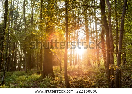 Sun shining through trees in a forest lighting up the trunks and forest floor with a & Sun Beams Coming Through Autumn Black Stock Photo 317607503 ... azcodes.com