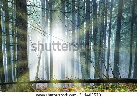 Sun shining through trees in the dark misty forest