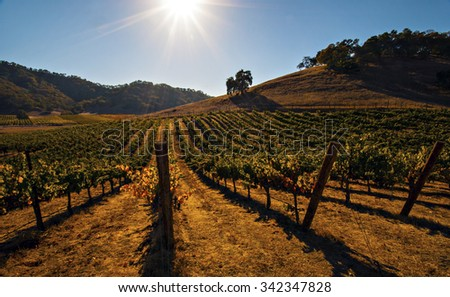 Sun star over a vineyard