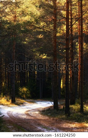 sun, the first snow forest - stock photo